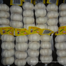 Experienced Supplier of Chinese Fresh White Garlic