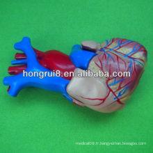 ISO Taille de la vie Modèle de coeur humain, modèle de coeur pédagogique, coeur d'anatomie