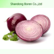 Légumes frais Oignon rouge frais Oignon frais