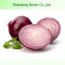 2015 Fresh Onion with High Quality in China