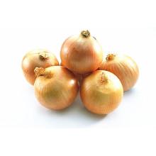4-6cm Venda quente fresca cebola amarela
