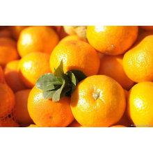 Miel naranja bebé