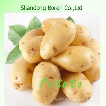 Geben Sie Ihnen die hochwertige frische Kartoffel