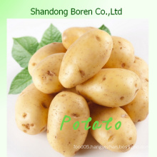 Supply Fresh Holland 8 Potato
