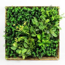 Новый дизайн низкая стоимость арт 3D растения живой изгороди стены для украшения