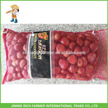 Excellent Quality Reasonable Price Fresh Chestnut