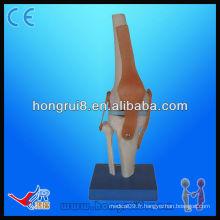 Modèle de modèle de squelette artificiel de joint de taille Vivid haute qualité