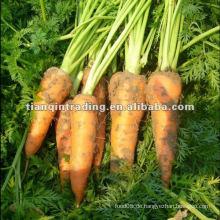 Porzellan Karotte zum Verkauf