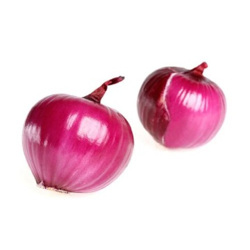 Export The High Quality Red Onion