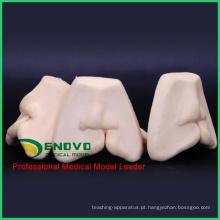 VENDER 12588 oral Fissura Labial Lábio Sólido Modelo de Treinamento Suave