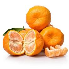2021 New Crop China Fresh Citrus Mandarin Orange