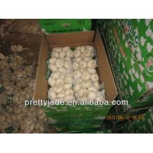 high quality china garlic