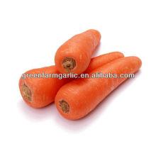 Frische Karotten zum Verkauf
