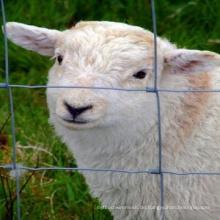 Heiß getauchten verzinkten Schaf- und Ziegenzaun