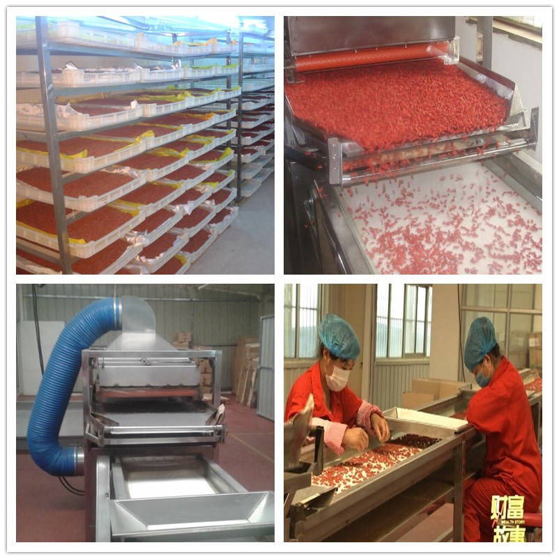 Goji berry process in factory