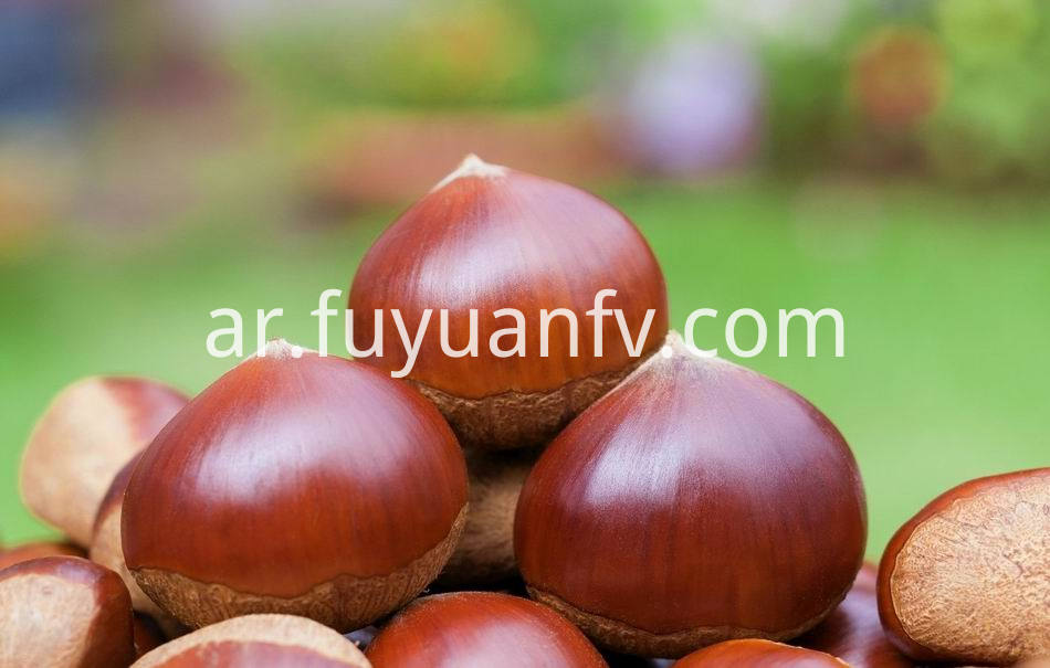 Fresh Chestnut 16