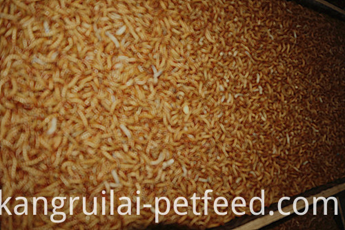 High Protein Dry Tenebrio Molitor Feed