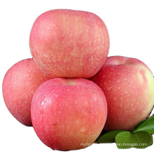 red gala red apple price chinese gala apples red gala from China