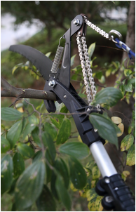 Telescopic Aluminum Handle Tree Pruner