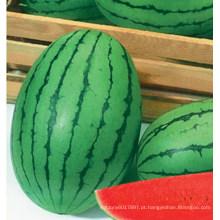 HW22 Gamju pequeno verde oval F1 sementes de melancia híbrida em sementes de hortaliças