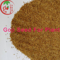 Wolfberry Seeds /Grow goji berries seed