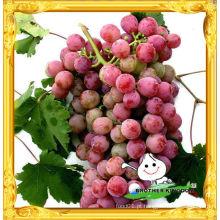 Vender 2012 nova colheita uva