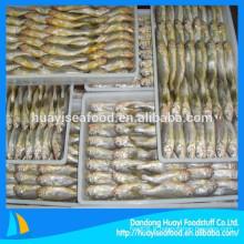 Poisson Croaker jaune de haute qualité