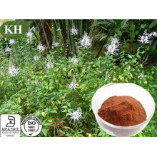 Factory Supply Orthosiphon Stamineus Extract