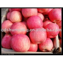 Pomme chinoise de Shandong Fuji