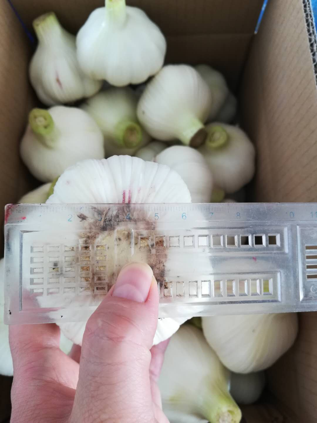 2020 New Garlic 2