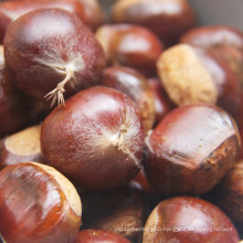 2021 New Crop Export Natural Chinese High Quality Cheap Fresh Chestnut