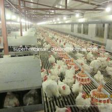Equipamento de avicultura automática para criador Farm House