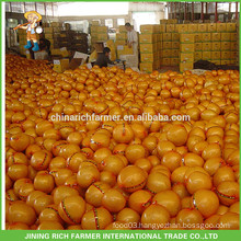 Export Russia Chinese Fresh Honey Pomelo