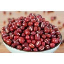 Kleine rote Bohnen trocken