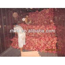 свежие красные экспорта Индии