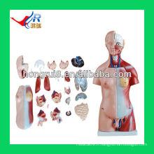 45cm, pièces modèle unisex en torse, modèle de corps humain