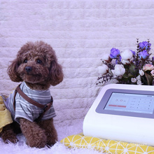 Therapy laser physical equipment therapy laser veterinary