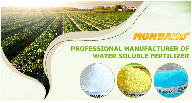 100% Water Soluble NPK Fertilizer 13-3-43 Price