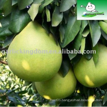 Sell fresh Pomelo from Jining Brother