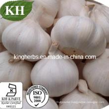 China Natural Garlic Extract GMP Factory