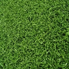 Herbe durable de tapis de golf en plastique