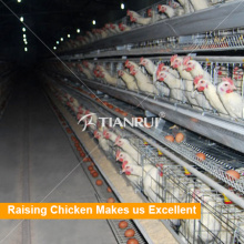 Tianfui design high quality poultry farm machinery used in chicken coop