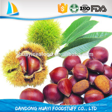 easily peeled fresh chestnut sweet big size