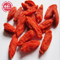 GMP Factory Best Selling Organic Goji Berries