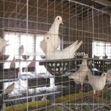 Fios de aço de baixo carbono malha de arame soldado, painéis para pombos ou gaiolas de pomba