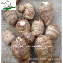 Taro for Middle east Market