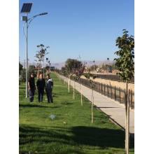 Luz de calle solar LED con poste