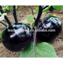 ME07 Duen maturidade precoce preto híbrido f1 sementes de berinjela, brinjaul sementes