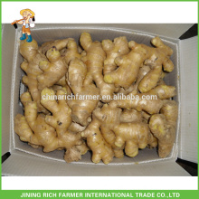 Half Air Dried Chinese Ginger For Cheap