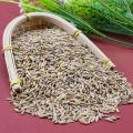 Natural Green Nutritious Highland barley Good Selling